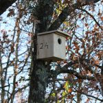 Nichoirs Oiseaux 24