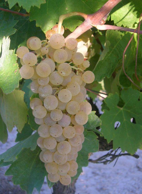 domainelespeyrieres-raisins-03