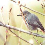 oiseaux-07